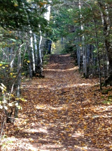 A photo from our hike this fall on Hecla Island