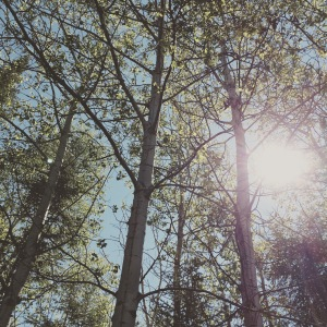 The sun peaking through the trees, shedding light on a new day.